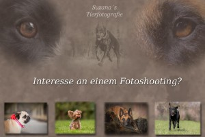 Flyer Suzana's Tierfotografie
